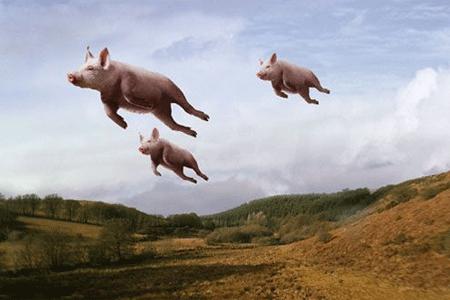 Bunner - Flying Pigs