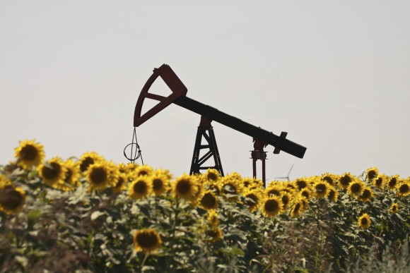 Oil pump jack operating in sunflower field