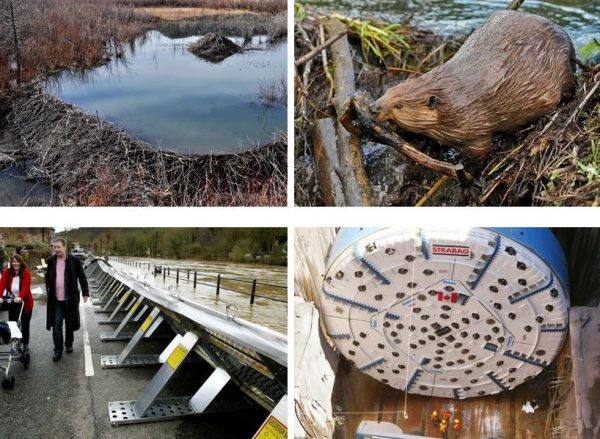If the humble beaver can do it, so can we! Mobile flood-protection barriers can be deployed where needed, while a tunnel borer can divert rising waters.